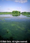Pymatuning Swamp, Harristown, Crawford Co., PA