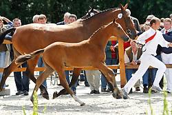 038 - Fresia van Dahlia VDL<br /> KWPN Paardendagen Ermelo 2010<br /> © Dirk Caremans