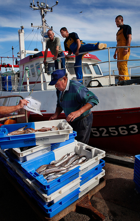 Unloading the catch in Le Guilvinec, France. <br />