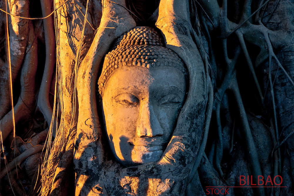 Buddha head.  Wat Phra Mahathat. Ayutthaya, Thailand.