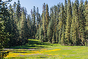 Alpine Meadow in Yosemite National Park