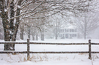 Here's a shot I've had in mind for a while.  It was finally snowing hard enough to capture it on the way home from Biddeford Pool.<br /> <br /> To me, this is iconic New England.  An old ship captain's home at the end of a tree lined drive, with a split-rail fence bordering the road.  It's nice to get a shot that is iconic and also not already photographed a million times by other photographers.