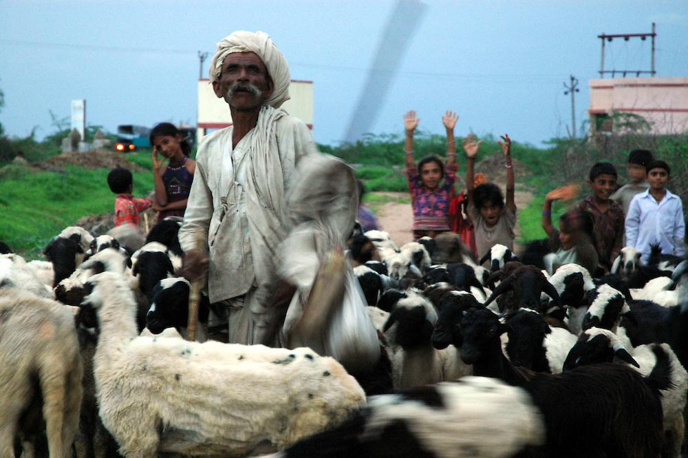 A shepherd bringing his herd home for the night...by Michael Benanav -mbenanav@gmail.com