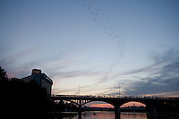 Bat Cruise,  Lady Bird Lake, Austin, Texas