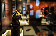 LOS ANGLELS, March 18, 2016<br /> <br /> shows a cat mummy from Egypt displayed during the preview of the ''Mummies of the World: The Exhibition'' held at the Bowers Museum, California, the United States. The exhibition, featuring more than 150 artifacts, real human and animal mummies from across the globe, will kick off on March 18.<br /> ©Exclusivepix Media