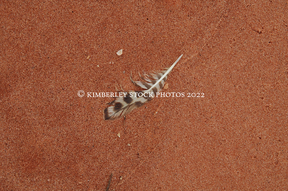 A lone feather contrasts with the pindan soil at Crab Creek, just to the south of Broome.  Crab Creek is home to thousands of shore birds and waders in the wet season.