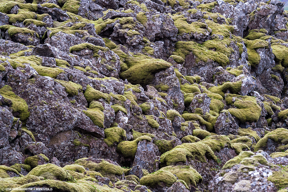 Moss,Mosi,Rock