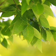 &quot;Green and Yellow&quot;<br />