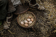 "Eggs fro sale out of an ""injera"" box, usually used to carry the staple bread, at the weekly market in Lalibela.  The Ethiopian Highlands."