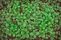 low lying vegetation covers Alaskas ground.