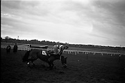 "16/01/1963<br /> 01/16/1963<br /> 16 January 1963<br /> Leopardstown Races at Leopardstown Race track, Dublin. Jockey T.S. Murphy parting company with his mount ""Rock Forest"", which fell at the last jump in the Dundrum Steeplechase."