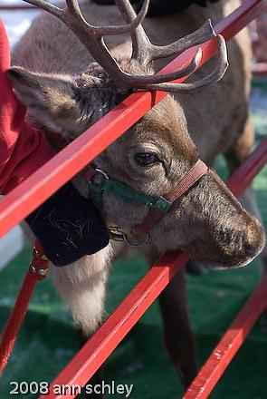 Reindeer Day @ Linden Hills