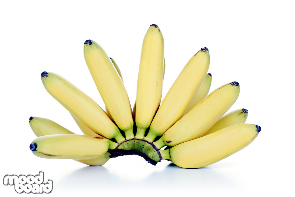 Studio shot of bunch of bananas