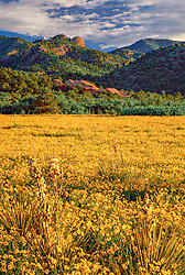 Vertical image of the Aiken Canyon preserve of the Nature Conservancy, near Colorado Springs, Colorado, showing a meadow full of yellow wildflowers and rock formations in hills of the background