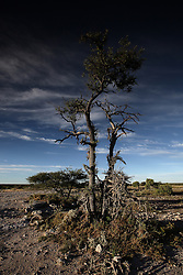 NAMIBIA ETOSHA 30APR14 - Landscape in the salt pan of Etosha National Park, Namibia.<br /> <br /> <br /> <br /> jre/Photo by Jiri Rezac<br /> <br /> <br /> <br /> © Jiri Rezac 2014