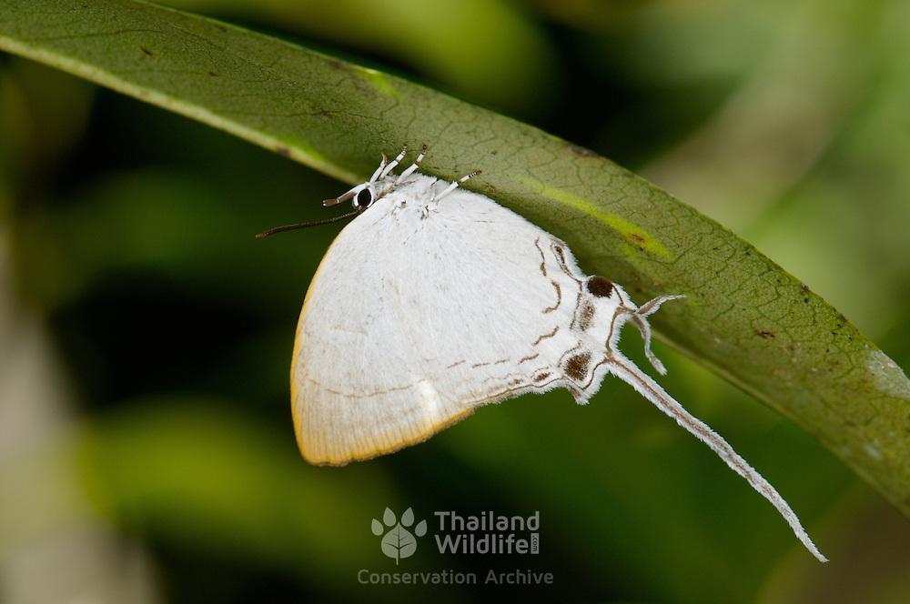 butterfly in Khai Yai National Park, Thailand