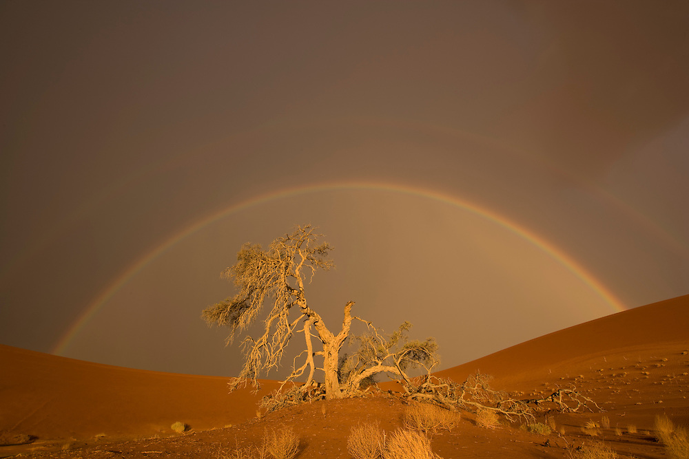 Africa, Namibia, Namib Naukluft National Park, Rainbow and rain clouds above acacia tree branch in Namib Desert near Sossusvlei