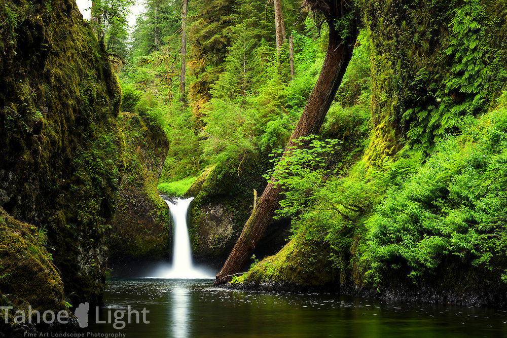 Punchbowl  Falls along the popular Eagle Creek trail in the Columbia Gorge area of Oregon.