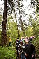 JEROME A. POLLOS/Press..Mark Clayton looks up at the tall trees surrounding his class from Prairie View Elementary as they hike through Q'emiln Park during a fifth grade field trip Wednesday. During the outing students learned about the ecosystem of the park, the birds of prey that live in the area, wild land firefighting, and the life of a salmon.