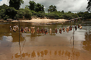 Fish sun-drying<br /> Temporary Fishing Camp<br /> Mapari River<br /> Mapari<br /> Rupununi<br /> GUYANA<br /> South America