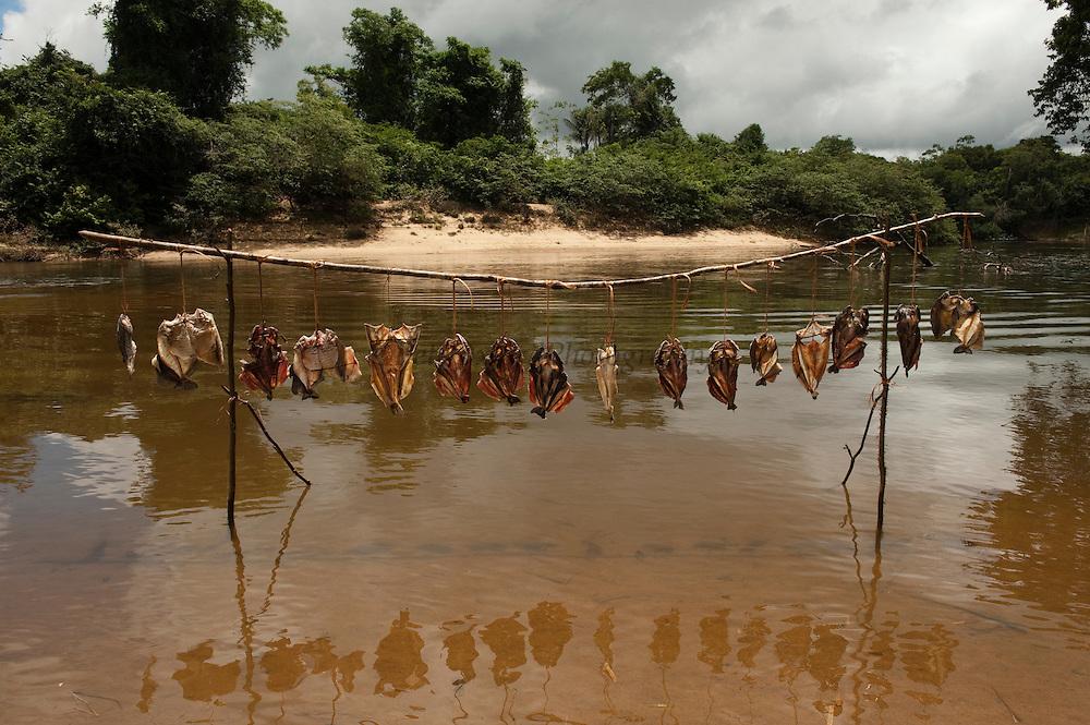 Fish sun-drying<br /> Temporary Fishing Camp<br /> Mapari River<br /> Mapari<br /> Rupununi<br /> GUYANA<br /> South America
