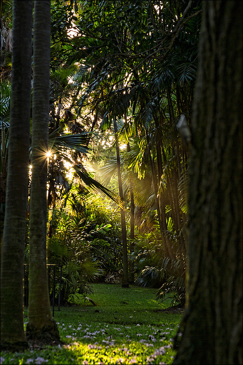 Early morning light shines through foliage at Foster Botanical Garden in Honolulu, HI. ©PF Bentley