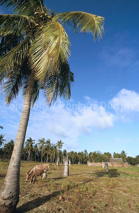 JARDIN, ILE DE LAMU, KENYA