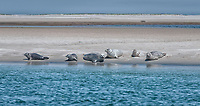 seals sunning on the shore