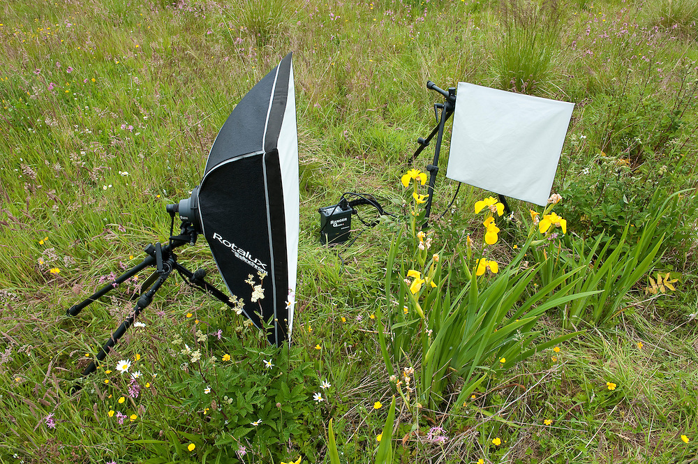 Set up for field studio flower photography, Angus, Scotland