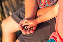 Hands full of shells on East Gosling Island in Casco Bay, Harpswell, Maine.