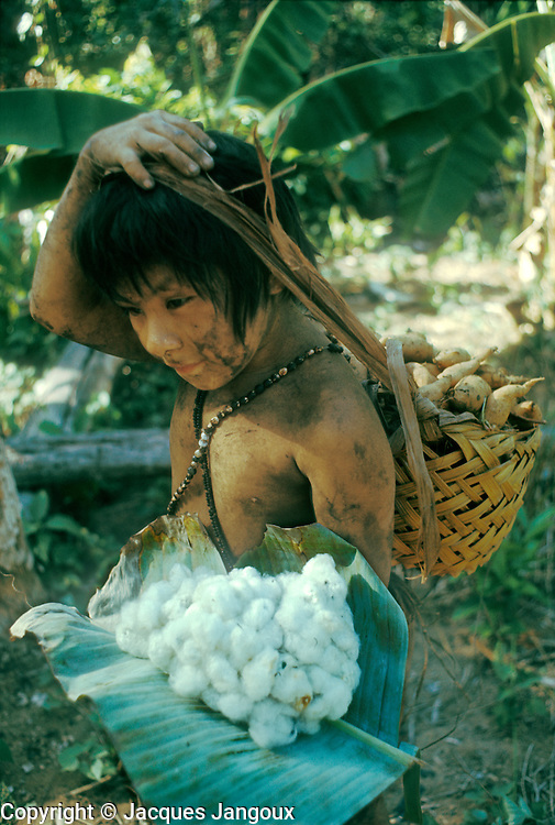 Slash-and-burn agriculture by Indians of Guiana Highlands of Venezuela: girl with harvest of cotton and sweet potatoes.