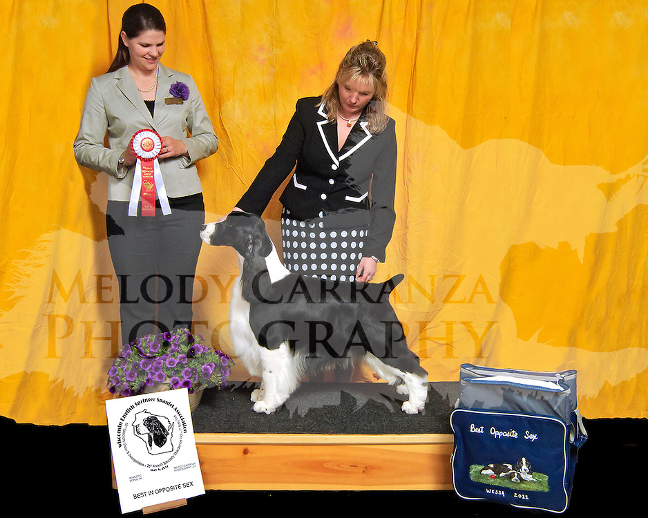 AKC sanctioned Specialty dog show. Breed is English Springer Spaniel.