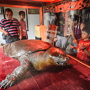 A little boy looks at a cast of the famous turtles of Hoan Kiem Lake. This display is at the Temple of the Jade Mountain (Ngoc Son Temple) on Hoan Kiem Lake in the heart of Hanoi's Old Quarter. The temple was established on the small Jade Island near the northern shore of the lake in the 18th century and is in honor of the 13-century military leader Tran Hung Dao.