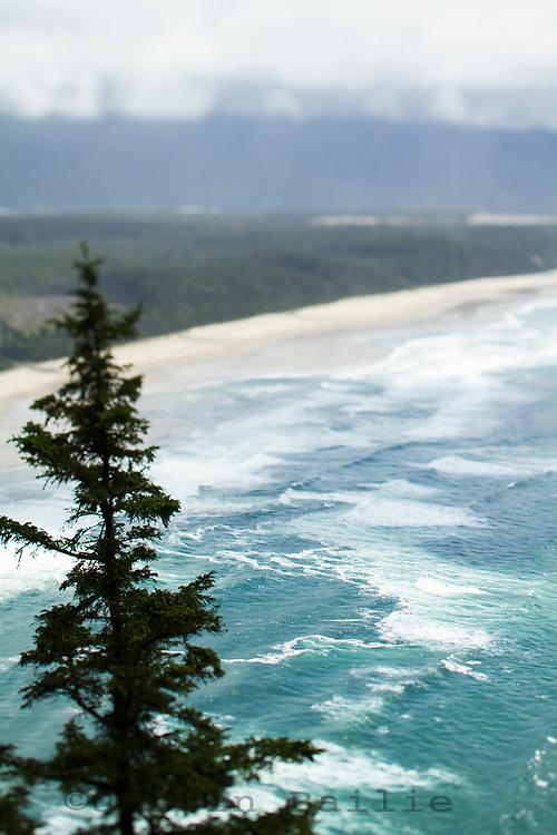 Cape Lookout Trail along the Oregon Coast.