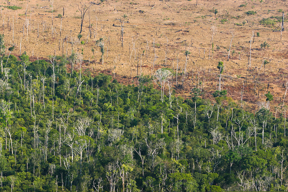 "Aug. 5, 2005: Flight around Sinop andaround the ""Parque das Castanheiras"" . The Brasilian Nut Tree ""Castanheira"" is protected in Brasil, but plenty had been logged (some where left alone standing on the soy fields). ©Daniel Beltra"