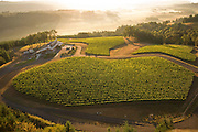 Aerial view of Penner-Ash estate vineyards, Yamhill-Carlton AVA, Willamette Valley, Oregon