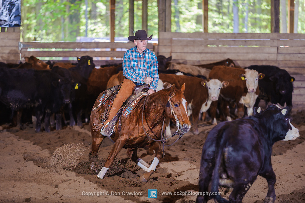 May 20, 2017 - Minshall Farm Cutting 3, held at Minshall Farms, Hillsburgh Ontario. The event was put on by the Ontario Cutting Horse Association. Riding in the Non-Pro Class is Scott Reed on LL CRockett Rocket owned by the rider.