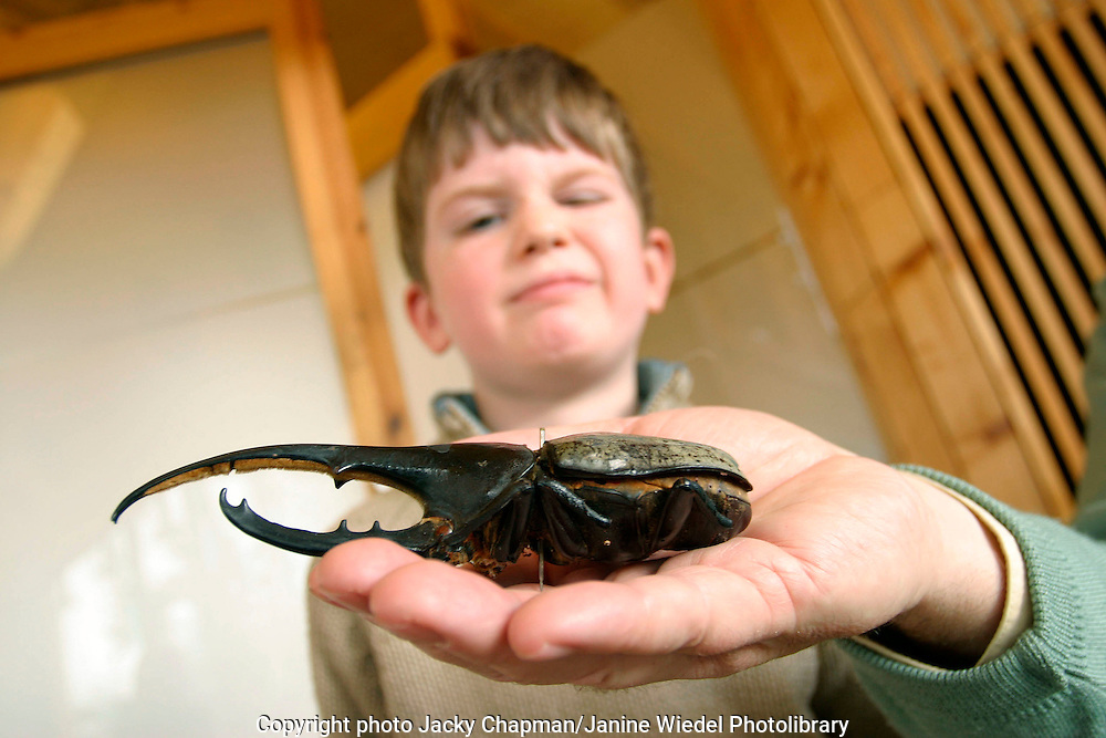 Hercules beetle being shown to a young boy on primary school visit to the Horneman museum.