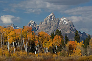 A stand of blazing fall aspens highlight Grand Teton, Mount Owen and Teewinot Mountain in the distance.