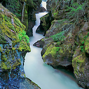 Avalanche Gorge in Glacier National Park, Montana.