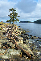 Driftwood on the shore at Drumbeg Provincial Park, Gabriola, British Columbia, Canada   Photo: Peter Llewellyn