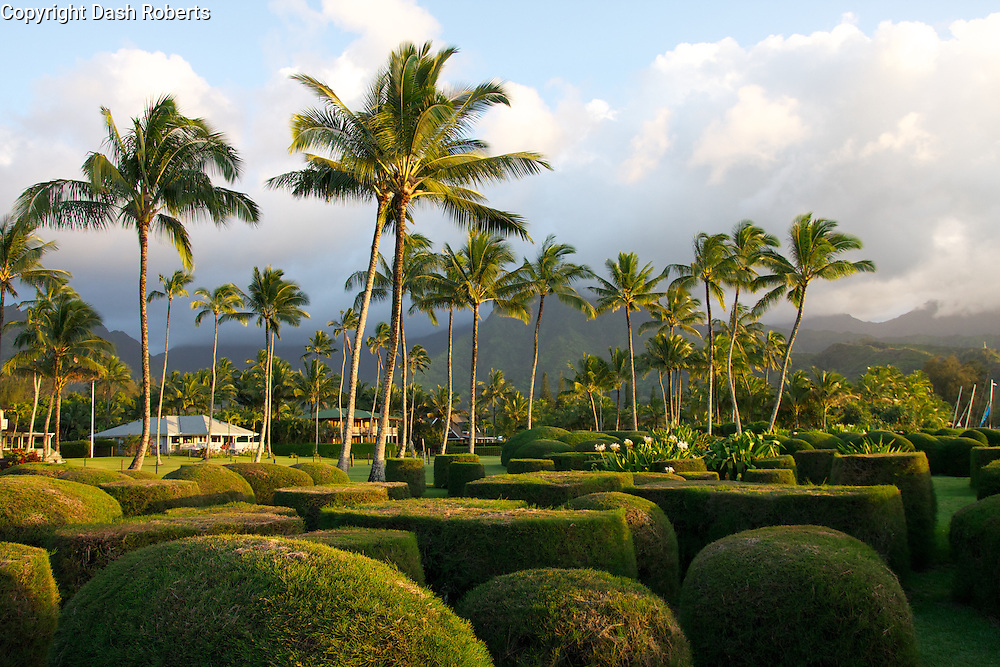 Palm trees line yards along Hanalei Bay Beach, Hawaii, on the island of Kauai with mountain range in background.