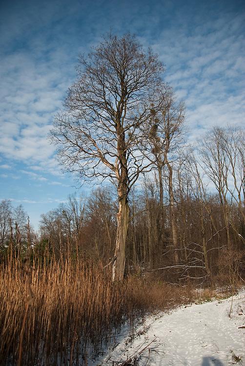 Winter Landscape near Cieszyn, southern Poland, November 2010.