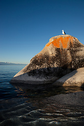 """Seagull on a Tahoe Boulder 3"" - This seagull standing on a orange, black, and grey boulder was photographed near Speedboat Beach, Lake Tahoe."