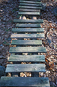 wooden walkway over fallen leaves