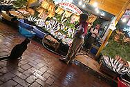 Istanbul- Mercato del pesce<br /> &copy; Paolo della Corte