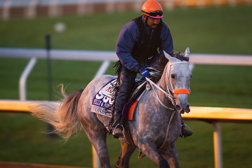 October 29, 2015:   Stonetastic, trained by Kelly Breen and owned by Stoneway Farm, exercises in preparation for the Breeders' Cup Filly & Mare Sprint at Keeneland Race Track in Lexington, Kentucky. Alex Evers/ESW/CSM
