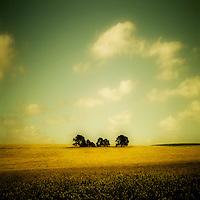 Trees in a farmers field