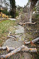 Tree Debris on Sidewalk from Wind Storm, Pasadena, California