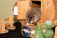 2014 - Groundhog Day with Rosie at Boonshoft Museum of Discovery